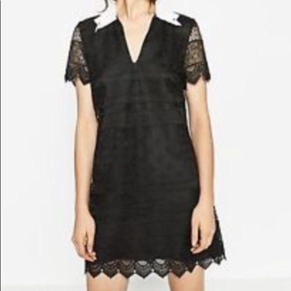 c00a2305bde ZARA Black short lace dress with white collar -NWT